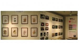 きのこ展示室2